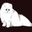 kedi sözlük