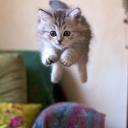 bir garip kedicik